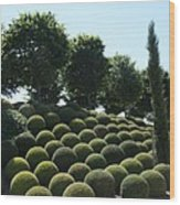 Cypress And Boxwood Garden Wood Print