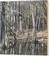 Cypress Bog Wood Print