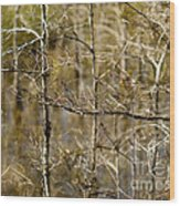 Cypress Branches Wood Print