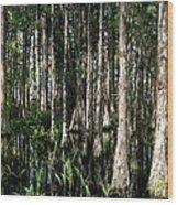 Cypress Dome Interior. Wood Print