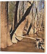 Cypress Hallway Wood Print