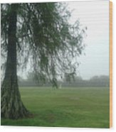 Cypress In The Mist Wood Print