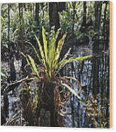 Cypress Knees And Ferns Wood Print