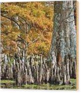Cypress Knees In Fall Wood Print