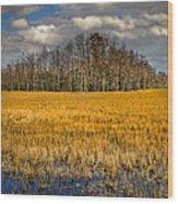 Cypress Marsh Wood Print