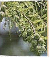 Cypress Nuts Wood Print