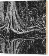 Cypress Roots - Bw Wood Print