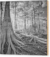 Cypress Roots In Big Cypress Wood Print