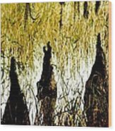 Cypress Roots Wood Print