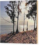 Cypress Shore Wood Print