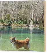 Cypress Spring Pup Wood Print by Bob Jackson
