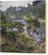 Cypress Wood Print by Stephen Campbell