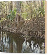 Cypress Swamp Wood Print