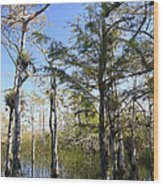 Cypress Swamp Wood Print by Rudy Umans