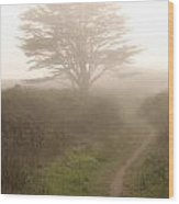 Cypress Tree In The Edge Of A Coastal Fog Wood Print