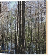 Cypress Trees Wood Print by April Wietrecki Green