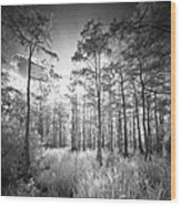 Cypress Trees In Big Cypress Wood Print