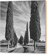Cypress Trees - Tuscany Wood Print