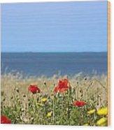 Cyprus Poppies Wood Print