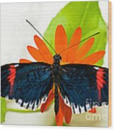 Cythera Butterfly Wood Print