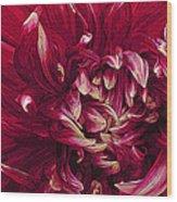 D Light Ful Dahlia Wood Print