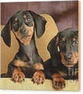 Dachshund Puppies Wood Print