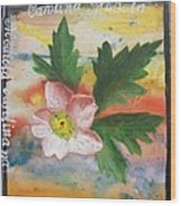 Texas Wildflowers Tp X Wood Print