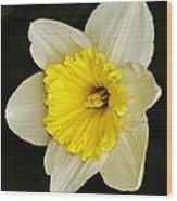 Daffodil 2014 Wood Print