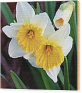 Daffodil Art  Wood Print
