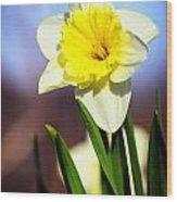 Daffodil Blossom Wood Print