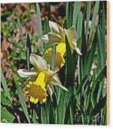 Daffodil Buddies Wood Print
