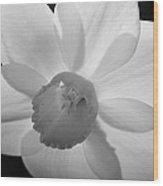 Daffodil Bw Wood Print