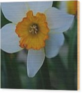 Daffodil Close Up Wood Print