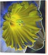 Daffodil Dreams - Photopower 1907 Wood Print
