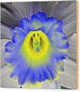 Daffodil Dreams - Photopower 1919 Wood Print