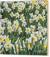 Daffodil Field 2 Wood Print