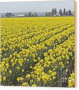 Daffodil Field Wood Print