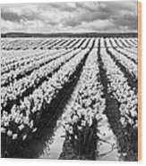 Daffodil Fields II Wood Print