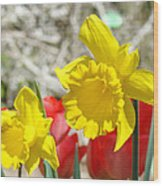 Daffodil Flowers Art Prints Spring Daffodils Red Tulip Garden Wood Print by Baslee Troutman
