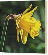 Daffodil - Impressions Wood Print