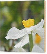Daffodil In Profile Wood Print