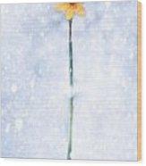 Daffodil In Snow Wood Print