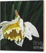 Daffodil In The Rain 2 Wood Print