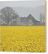 Daffodil Haze Wood Print