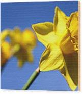 Daffodil Line Wood Print