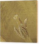 Daffodil Macro Wood Print