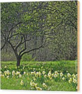 Daffodil Meadow Wood Print