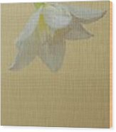 Daffodil On Yellow Wood Print