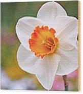 Daffodil  Wood Print by Rona Black