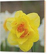 Daffodil Standout Wood Print